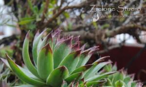zielone-studio-inspiracje-angielskie-ogrody-nasadzenia-02