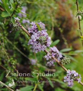 zielone-studio-inspiracje-angielskie-ogrody-nasadzenia-05