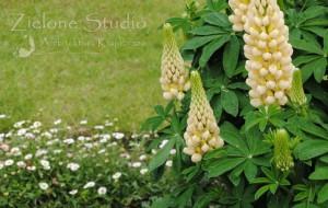 zielone-studio-inspiracje-angielskie-ogrody-nasadzenia-06