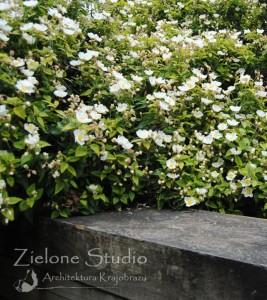 zielone-studio-inspiracje-angielskie-ogrody-nasadzenia-10