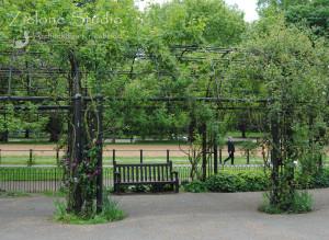 zielone-studio-inspiracje-angielskie-ogrody-nasadzenia-21