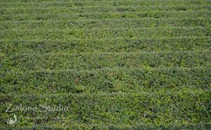 zielone-studio-inspiracje-angielskie-ogrody-nasadzenia-30