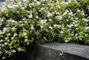 zielone-studio-inspiracje-angielskie-ogrody-nasadzenia-34