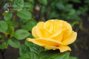 zielone-studio-inspiracje-angielskie-ogrody-nasadzenia-37