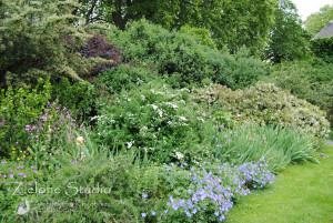 zielone-studio-inspiracje-angielskie-ogrody-nasadzenia-38