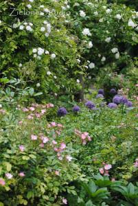 zielone-studio-inspiracje-angielskie-ogrody-nasadzenia-40