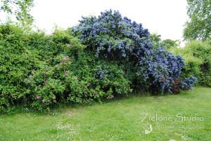 zielone-studio-inspiracje-angielskie-ogrody-nasadzenia-42
