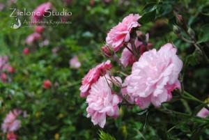 zielone-studio-inspiracje-angielskie-ogrody-nasadzenia-51