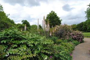 zielone-studio-inspiracje-angielskie-ogrody-nasadzenia-52