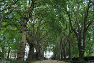zielone-studio-inspiracje-angielskie-ogrody-nasadzenia-58